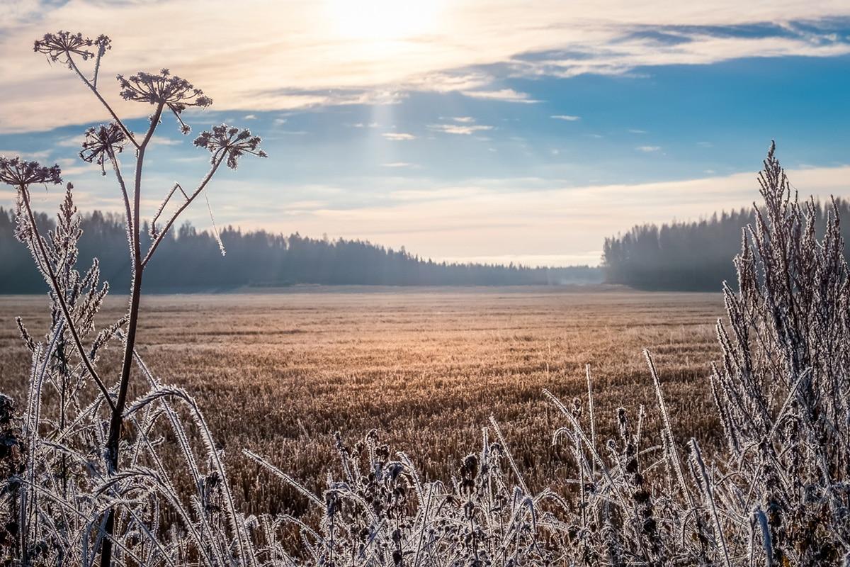 Frosty Saskatchewan meadow