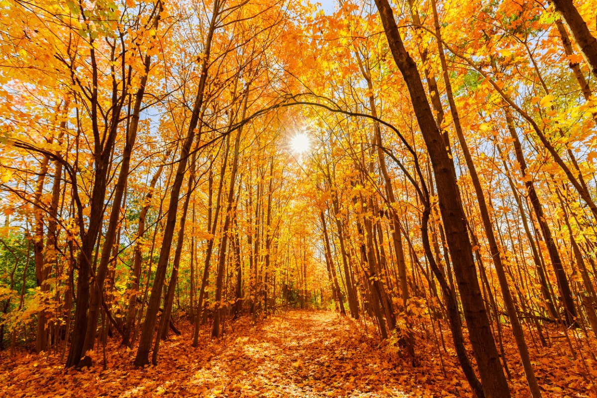 Canada fall landscape in the forest